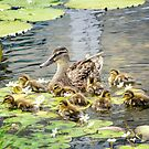 Mallard Family by KBritt