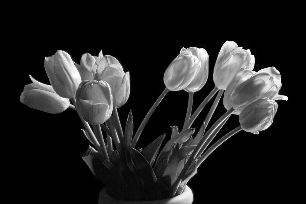 Perennial Tulip Flowers in Black and White No. 0105 by Randall Nyhof