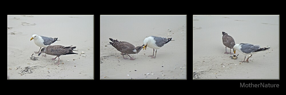 How To Eat A Blue Crab - Great Black Backed Gull In Training by MotherNature