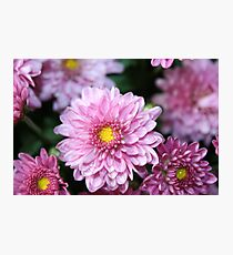 Purple and White Flowers Photographic Print