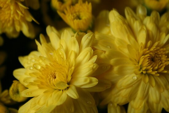 Yellow Flowers by Molly Quinn
