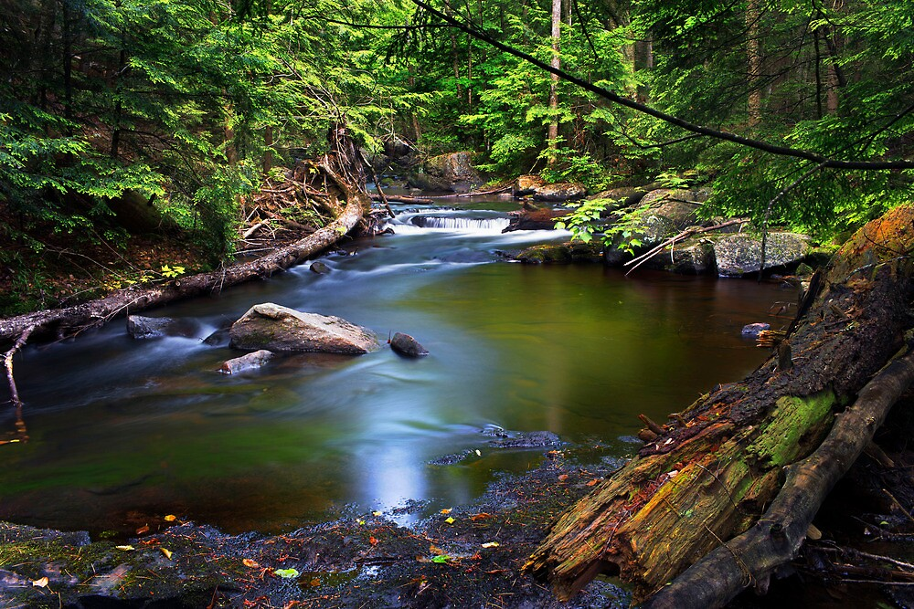 Roots Rocks and RotterFalls by Nazareth