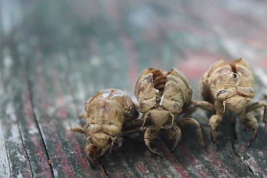 Three Bugs by Molly Quinn