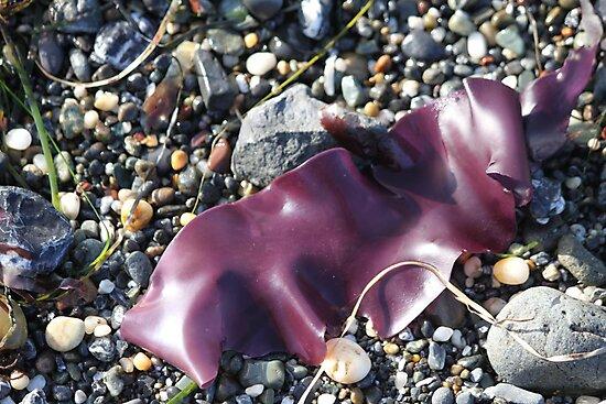 Purple Seaweed by Molly Quinn