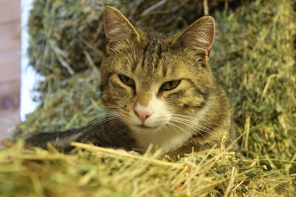 Barn Cat by Hazelnut87