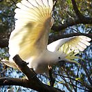 Angelic wings by STEPHEN GEORGIOU PHOTOGRAPHY