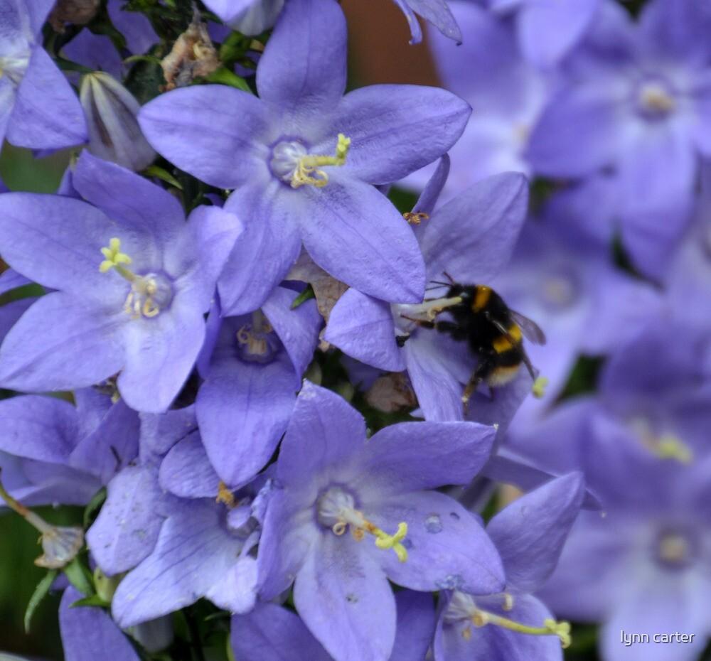 Rhapsody In Blue by lynn carter