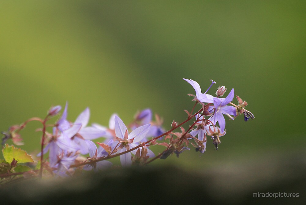Rockery in bloom by miradorpictures