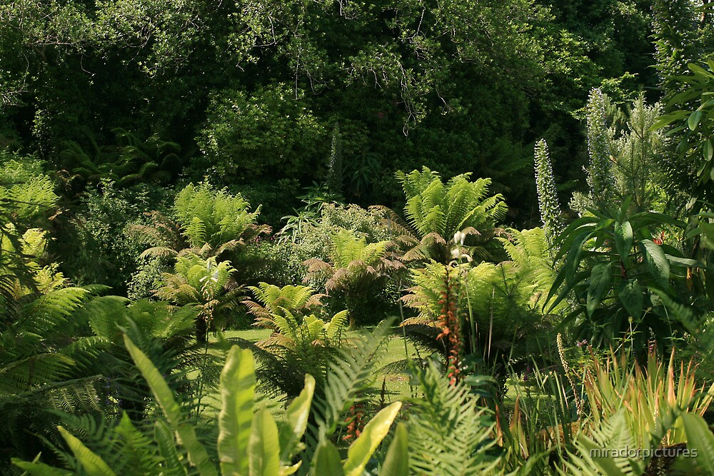 Sub-tropical gardens on the ring of kerry, Ireland by miradorpictures