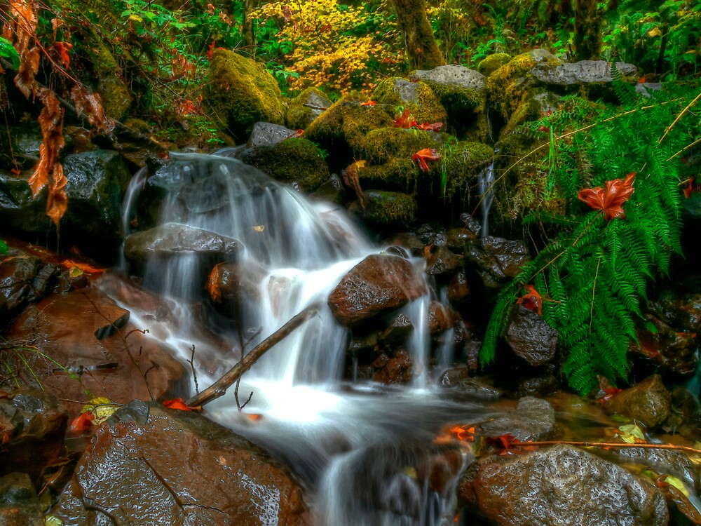 It Must Be Summer Time by Charles & Patricia   Harkins ~ Picture Oregon