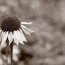 Stand Alone by Lisa Williams