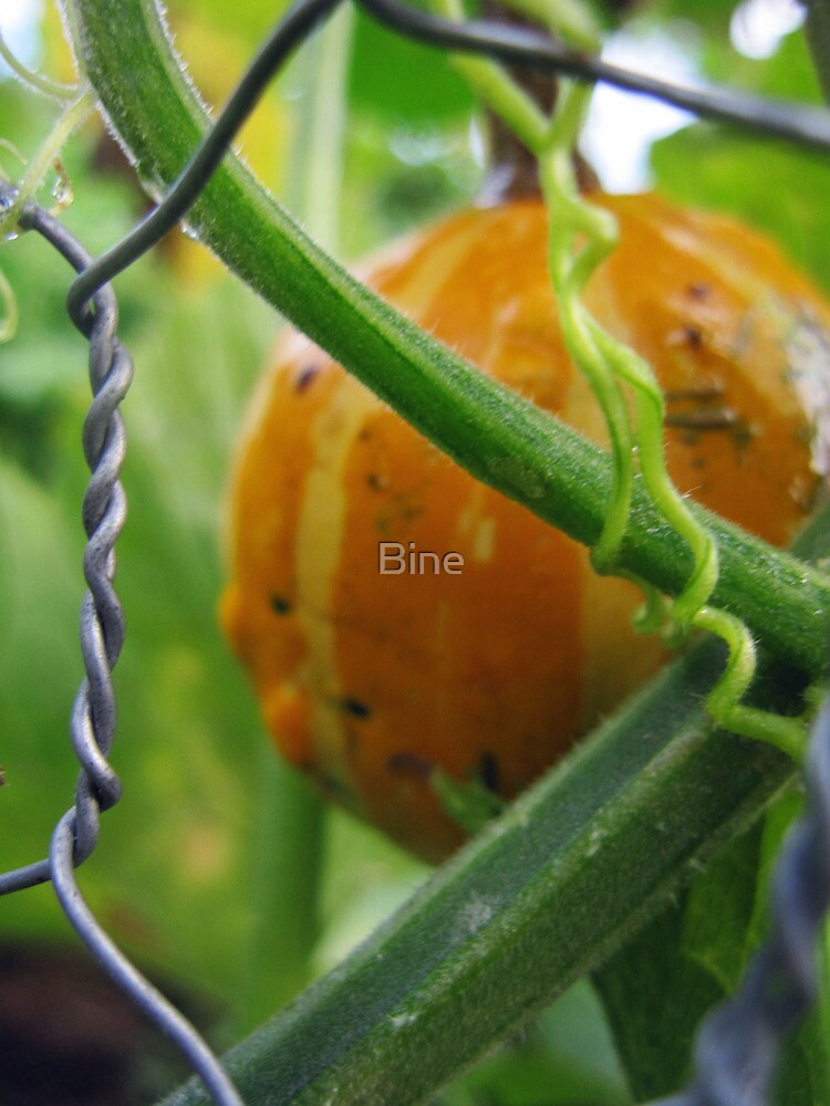 Ripe for the taking by Bine
