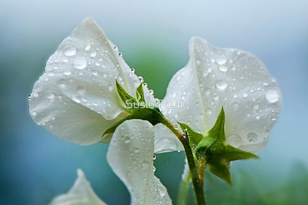Rain On Sweet Peas by Susie Peek
