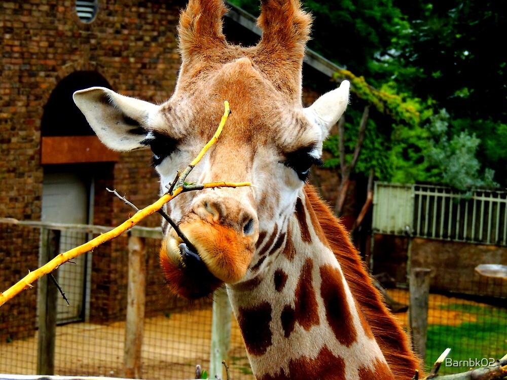 Giraffe and his Twig by Barnbk02