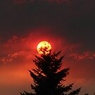 Red Sun by Jamey Sanger