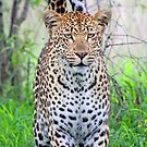 African beauty! by jozi1