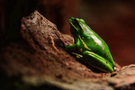 The Frog by Brandon Batie