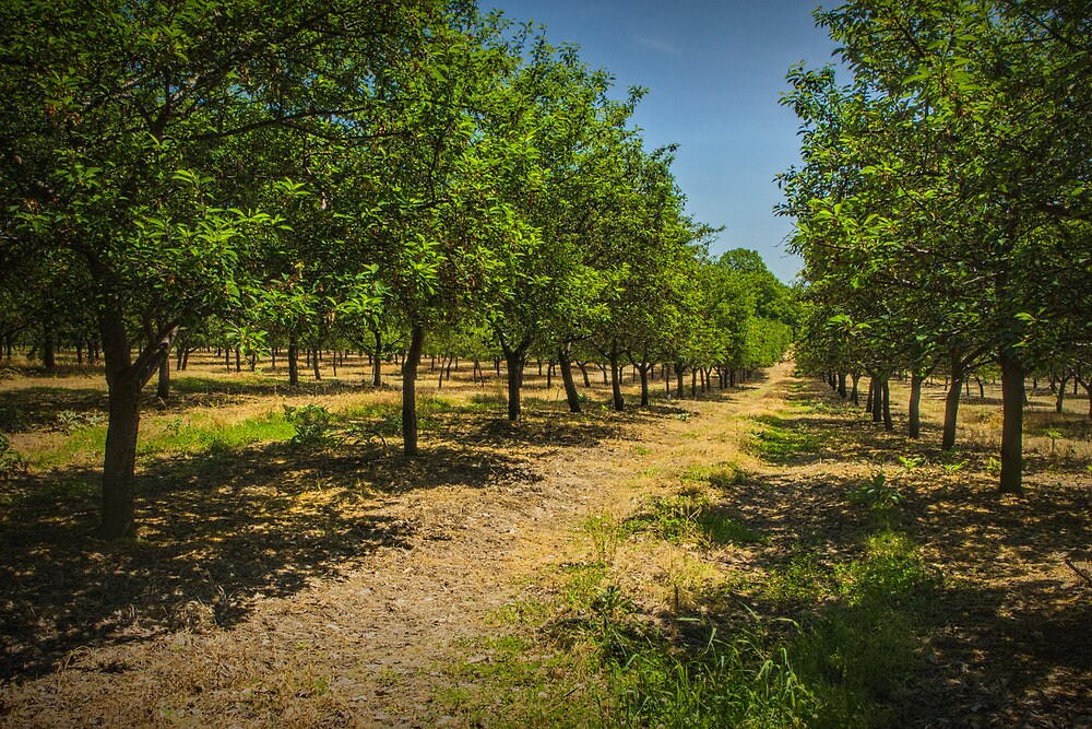Orchard in West Michigan by Randall Nyhof