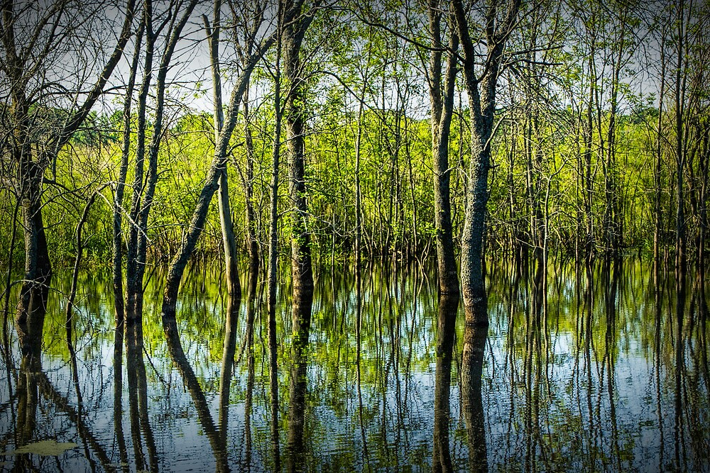Tree Reflections in a Pond in West Michigan by Randall Nyhof