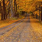 Fall Rural Country Road by Randall Nyhof