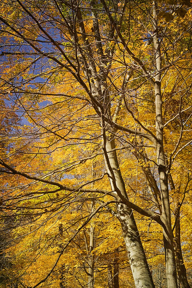 Autumn Leaves at Hager Park No 681171 by Randall Nyhof