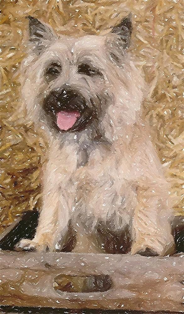 Cairn Terrier Dog Portrait  by Oldetimemercan