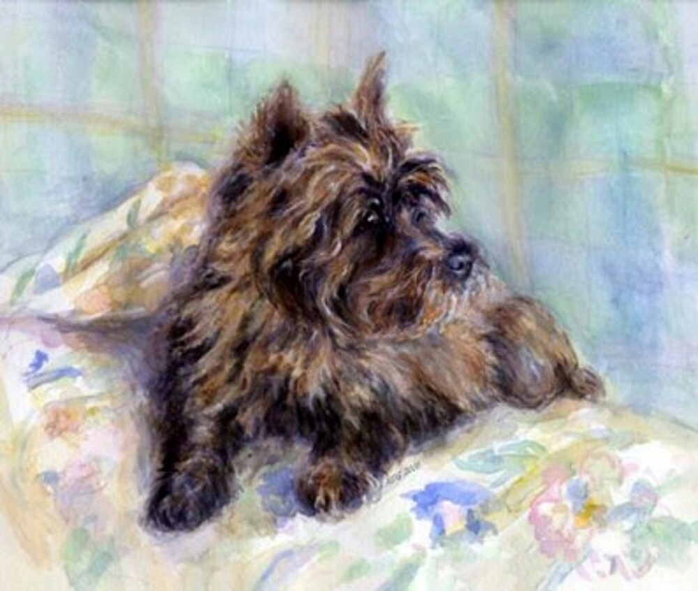 Cairn Terrier Dog Portrait  by Oldetimemercan
