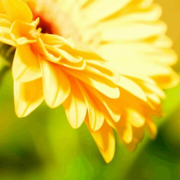 Bright Sunny Yellow Flower by llamafist