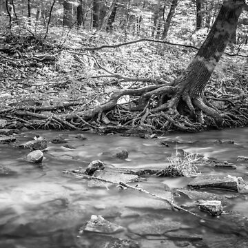 The River's Roots by DJBellis