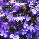 Too Many To Count - Purple Lobelia (Untouched) by BlueMoonRose
