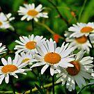 A little flower~ by Jeananne  Martin