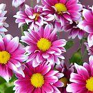 Flower 2 by Lisa Williams