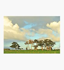 remnant red gums Photographic Print