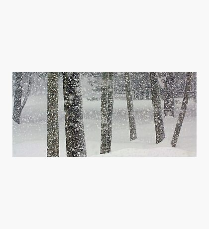 Snow-Squall -- While Walking In The Woods Photographic Print
