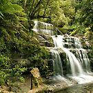 Liffey Falls, Tasmania by SusanAdey