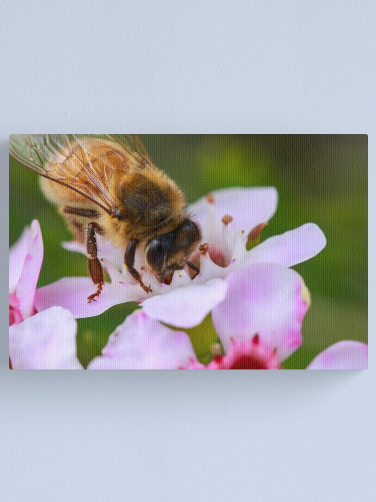 Alternate view of Bee on Geraldton Wax Canvas Print