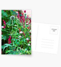 Romantic summer garden with globe thistle Postcards