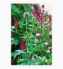 Romantic summer garden with globe thistle Photographic Print