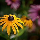 Summer Glory by Peter O'Hara