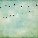 A Flock Of Seagulls by Honey Malek