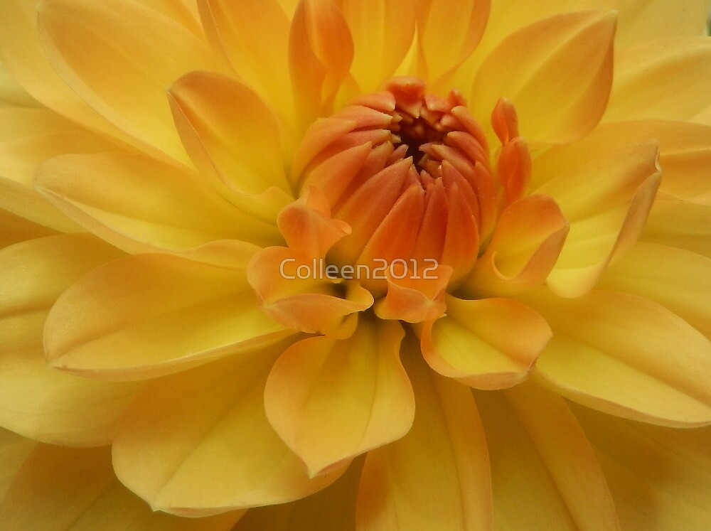 ORANGES AND LEMONS .. *VIEW LARGE* by Colleen2012