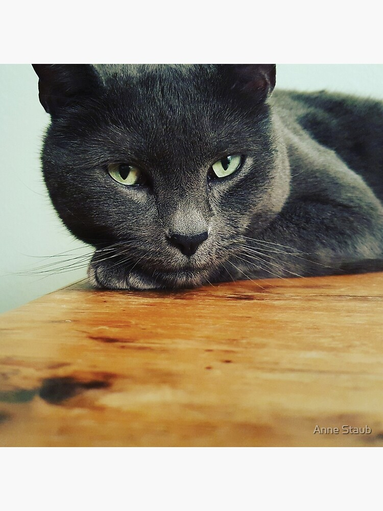 Russian Blue cat by AnnePIC
