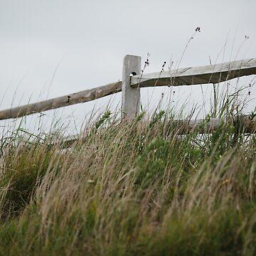 Seaside by PHLBike