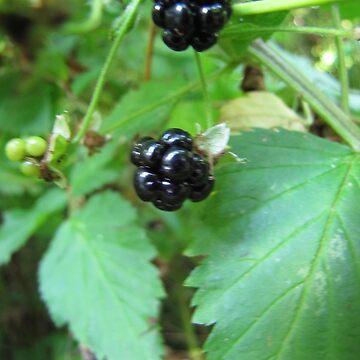 Blackberries by Rystall