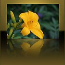Yellow Lily Reflection by Brian104