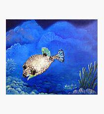 Casper - Ocean Series Tropical Fish Photographic Print