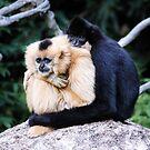 two monkeys by dirk hinz