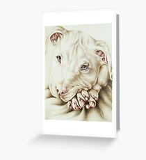 White Pit Bull Dog Drawing Greeting Card