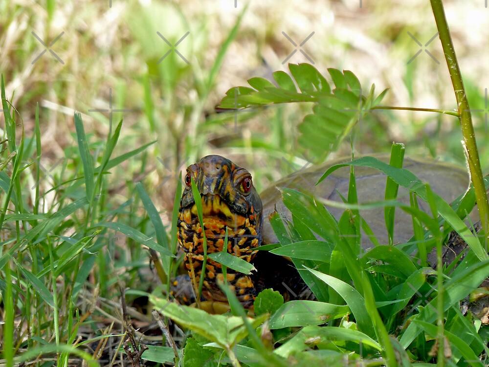 Hello Mr. Box Turtle by FrankieCat
