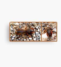 Mole cricket Canvas Print